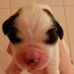 7 day old